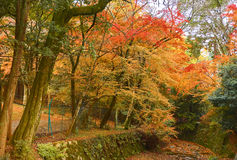 Colorful leave and tree in autumn Stock Image