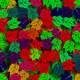 Colorful leaves Royalty Free Stock Photography
