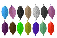 Colorful of leaves Royalty Free Stock Photography