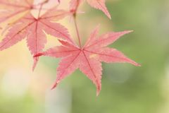 Colorful  leaves Royalty Free Stock Images