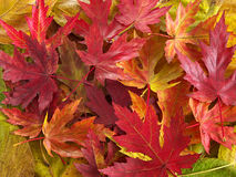 Free Colorful Leaves Royalty Free Stock Image - 286736