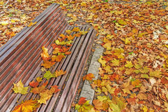 Colorful leaves all over the bench in autumn park, autumn leaves Royalty Free Stock Image