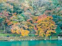 Colorful leaves along river in Arachiyama, Japan. Colorful leaves along river in autumn season in Arashiyama region, Kyoto, Japan Royalty Free Stock Image