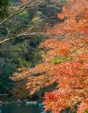 Colorful leaves along river in Arashiyama, Japan. Colorful leaves along river in autumn season in Arashiyama region, Kyoto, Japan Royalty Free Stock Images