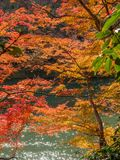 Colorful leaves along river in Arashiyama, Japan. Colorful leaves along river in autumn season in Arashiyama region, Kyoto, Japan Royalty Free Stock Image