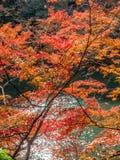 Colorful leaves along river in Arashiyama, Japan. Colorful leaves along river in autumn season in Arashiyama region, Kyoto, Japan Stock Photos
