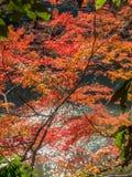 Colorful leaves along river in Arashiyama, Japan. Colorful leaves along river in autumn season in Arashiyama region, Kyoto, Japan Stock Images