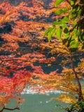 Colorful leaves along river in Arashiyama, Japan. Colorful leaves along river in autumn season in Arashiyama region, Kyoto, Japan Royalty Free Stock Photography