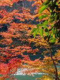 Colorful leaves along river in Arashiyama, Japan. Colorful leaves along river in autumn season in Arashiyama region, Kyoto, Japan Royalty Free Stock Photo