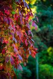 Colorful leaves in autumn royalty free stock photos