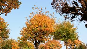 Autumn leaves a beauty of nature. Colorful of leaves in autumn a beauty of nature small park in  Germany Stock Photos