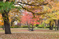 Colorful Leaves Of Autumn. This is the Minnehaha Park in Minneapolis, Minnesota Stock Images