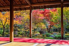 Colorful leaves in autumn park, Japan Royalty Free Stock Image