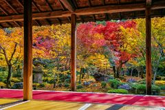 Colorful leaves in autumn park, Japan.  stock photography