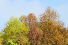 Colorful leaves. Colorful autumn leaves in sunshine day Stock Photography