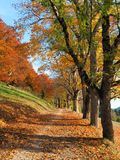 Colorful leaves in autumn in the Swabian Alb royalty free stock image
