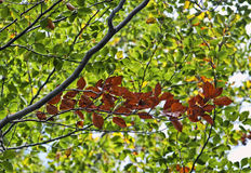 Colorful leaves in autumn tree Stock Photo