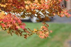 Colorful leaves on autumn trees stock photo