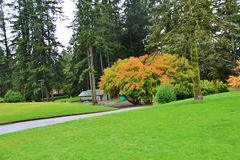 Colorful Leaves at Autumn, VanDusen Botanical Garden, Vancouver Downtown, British Columbia Stock Photography