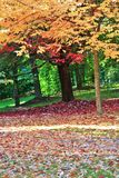 Colorful Leaves at Autumn, VanDusen Botanical Garden, Vancouver Downtown, British Columbia Stock Photos