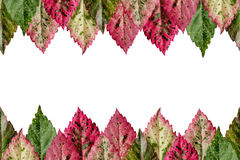 Colorful leaves. background Royalty Free Stock Photography