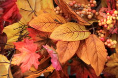 Colorful leaves and berries Stock Photography
