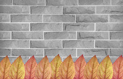 Colorful leaves on brick wall Royalty Free Stock Images