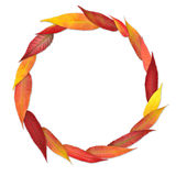 Colorful leaves in a circle Stock Image