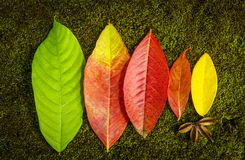 Colorful leaves - close up Royalty Free Stock Photos