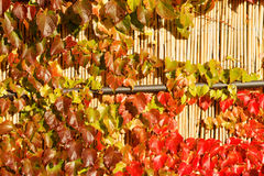 Colorful leaves stock photography