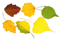 Colorful leaves collection Stock Photo
