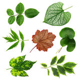 Colorful leaves collection Royalty Free Stock Image