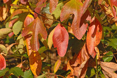 Colorful Leaves in the Fall Stock Images