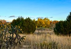 Sunset in Galisteo New Mexico. Colorful leaves in the fall in Galisteo New Mexico USA royalty free stock photo
