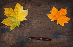 Colorful leaves in the fall on wooden board. Autumn scene. Stock Photography