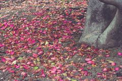 Colorful leaves falling on the ground beside tree in winter seasonal. Selective focus Stock Images