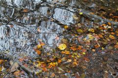 Colorful leaves floating in the river royalty free stock photo