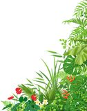 Side Corner  Border  with Tropical  Plants. Colorful leaves and flowers of tropical plants  floral background with space for text. Vertical side corner border Royalty Free Stock Photos
