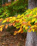 Colorful leaves in a foest royalty free stock image