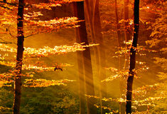 Colorful leaves in the forest with sunbeam Stock Image