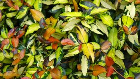 Colorful leaves at the garden.  stock footage