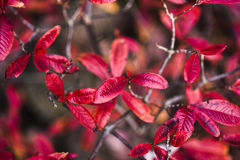 Colorful leaves in garden, autumn  time. Royalty Free Stock Photos