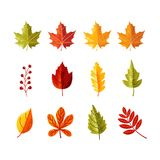 Colorful leaves with grain shadow for autumn season vector illustration