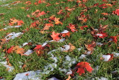 Autumn Leaves on Grass Royalty Free Stock Photos