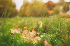 Colorful leaves in the grass, fall season Stock Photo