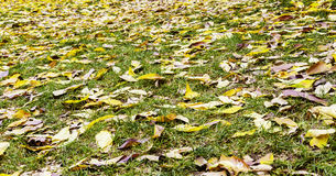 Colorful leaves. On grass ground Royalty Free Stock Photos
