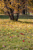 Colorful leaves on grass. In a park, Sosnowiec, Poland Stock Image