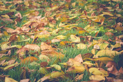 Colorful leaves on green grass in autumn seasonal at public park. Stock Photos