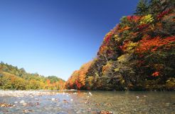Colorful  leaves in Gully  Matsukawa Stock Images