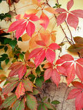 Colorful leaves Stock Photos